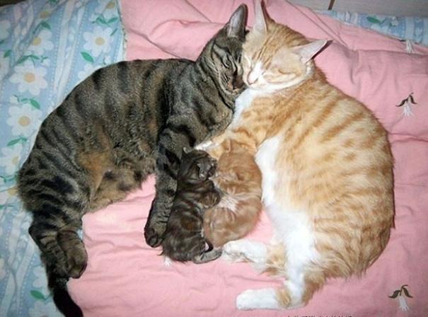 تصاویر دیدنی عکس و کلیپ  , عکس های دیدنی از خانواده گربه ها