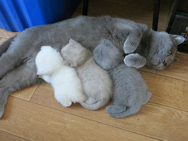 عکس های دیدنی - خونواده گربه ها - بچه گربه