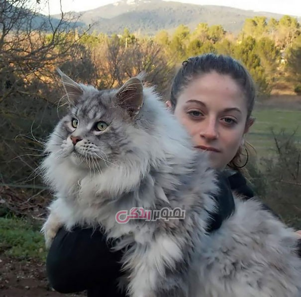 fluffy-cats (12)