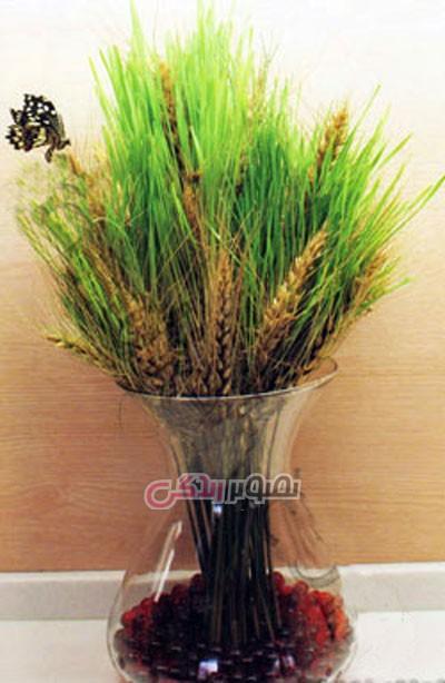 سبز  گندم در خاک آموزش سبز کردن خوشه گندم + فیلم آموزشی • مجله تصویر زندگی