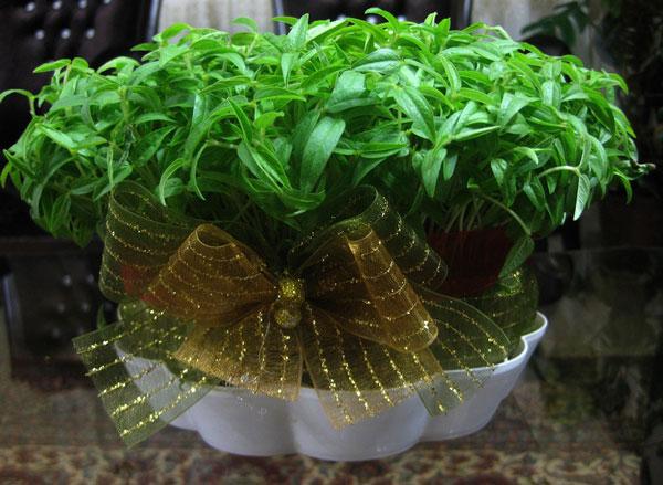 کاشت سبزه با کنجد زمان کاشت سبزه عید نوروز دانه های مختلف • مجله تصویر زندگی