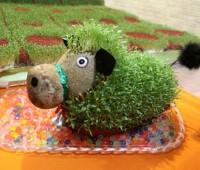 زمان کاشت سبزه عید نوروز دانه های مختلف
