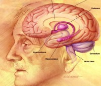 اثرات پیری بر فعالیت های مغز