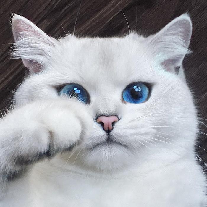 گربه ای با زیباترین چشم های دنیا