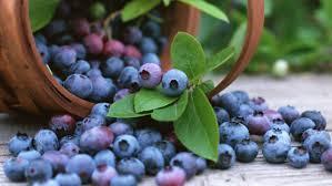 تغذیه  , خوراکی های مفید برای سرطان سینه