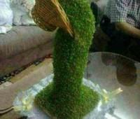 سبزه آبشاری