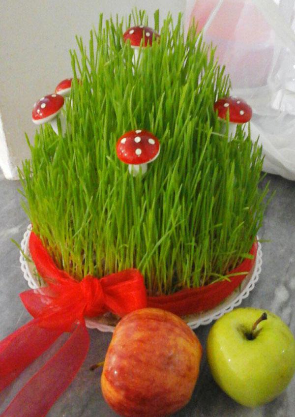 کاشت سبزه هفت سین