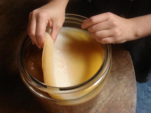 خواص کامبوجا , طرز تهیه چای کامبوجا