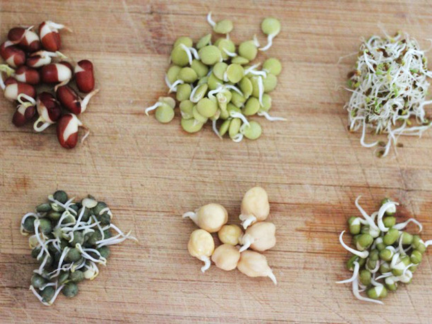عضله سازی با گیاهان عضله ساز