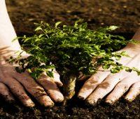 انواع خاک , مواد تشکیل دهنده خاک