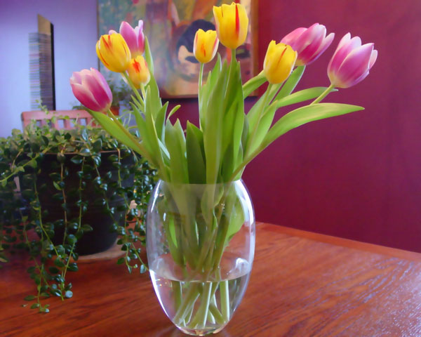 روش نگهداری گل در گلدان به مدت طولانی