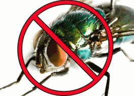 رهایی از شر مگس ها ، پشه ها و حشرات موذی