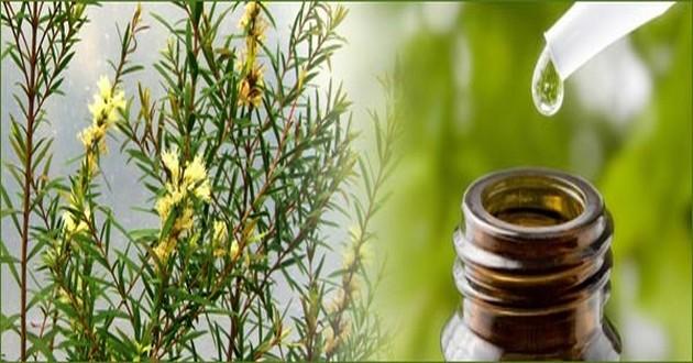 روغن درخت چای,درمان خارش واژن, عفونت واژن