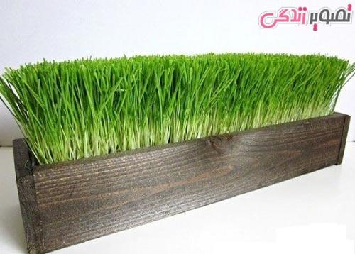زمان کاشت سبزه عید نوروز