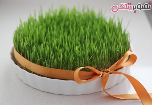 کاشت سبزه نخود عکس زمان کاشت سبزه عید نوروز و   نکاتی بـه منظور داشتن سبزه زیبا و   پر ... mimplus.ir