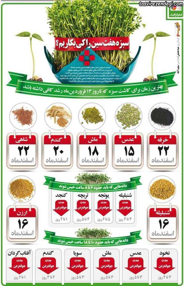 زمان کاشت انواع بذر سبزه هفت سین