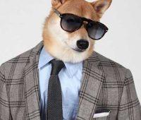 سگ مدل لباس مردانه