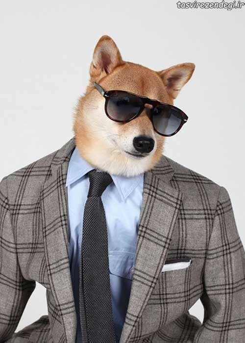 عکس های فان - سگ مدل لباس مردانه