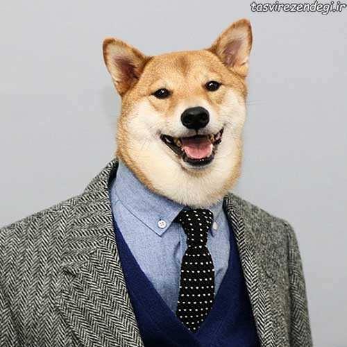 وقتی مدل لباس یک سگ باشه