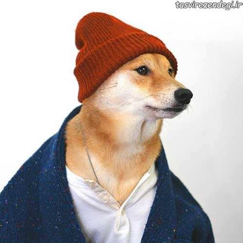 سگ مدلینگ لباس