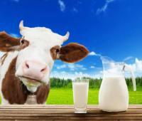روش تشخیص شیر تقلبی از شیر سالم