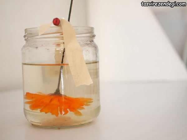 آموزش کریستالی کردن گل طبیعی