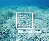 رنگ سال 2020 مرجانی سفید