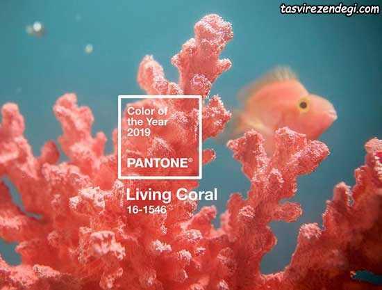 رنگ سال ۲۰۱۹ - living coral - رنگ مرجانی