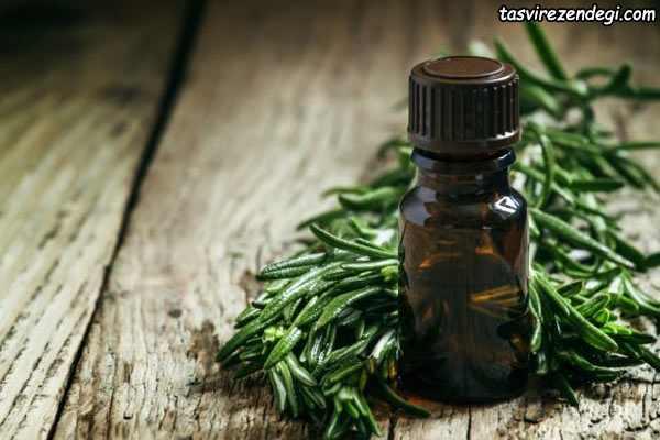 روغن درخت چای , درمان تبخال