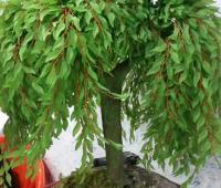 روش درست کردن درختچه بید کریستالی