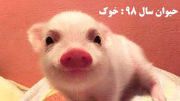خوک حیوان سال 98