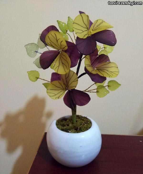 گل بنفشه کریستالی