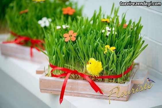تزیین سبزه هفت سین
