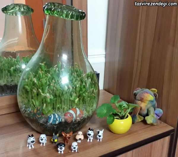 کاشت سبزه در تنگ شیشه ای