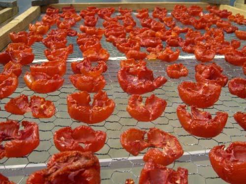خشک کردن گوجه در آفتاب
