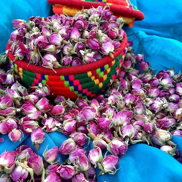 طرز خشک کردن غنچه گل محمدی