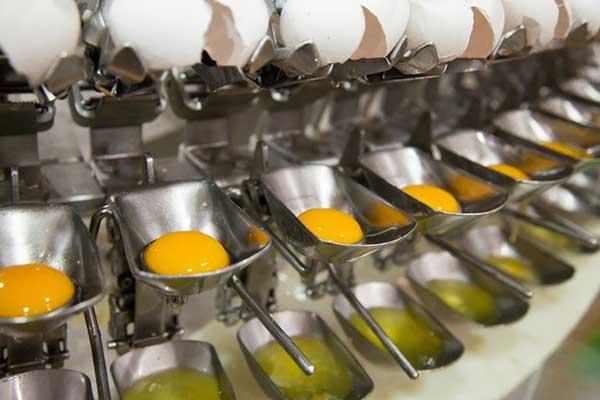 جداسازی زرده از سفیده تخممرغ در کارخانه تلاونگ