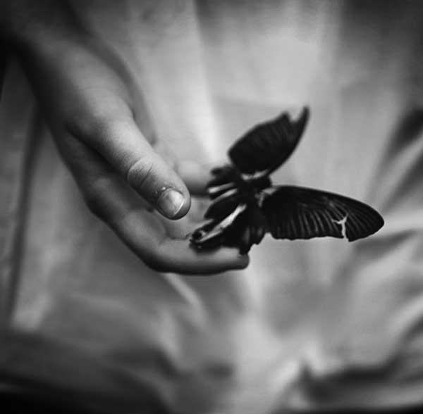 عکس پروانه سیاه سفید نشسته بر دست