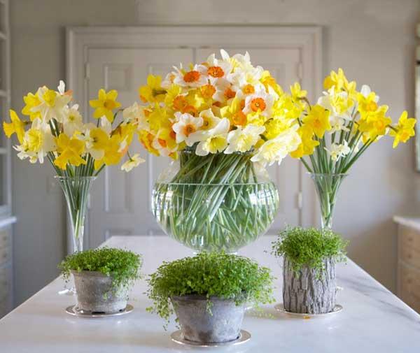 عکس گلدان گل نرگس