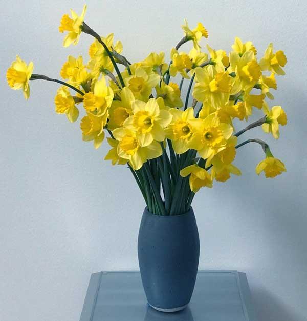 عکس پروفایل گلدان گل نرگس زرد