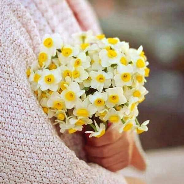 شاخه گل نرگس در دست