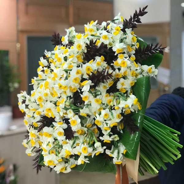 هدیه شاخه گل نرگس