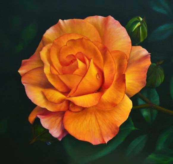 گل رز نارنجی