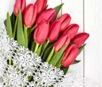 عکس گل لاله قرمز برای پروفایل