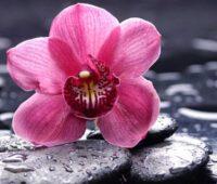 عکس پروفایل گل ارکیده صورتی
