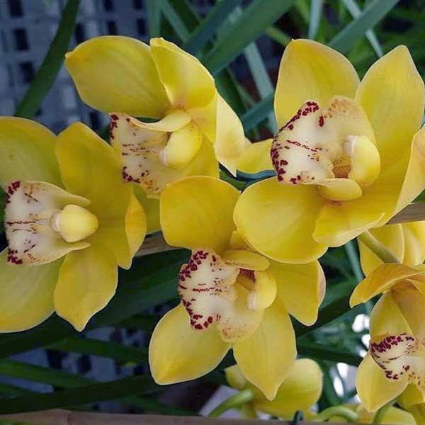 عکس پروفایل گل ارکیده زرد