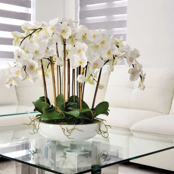 عکس پروفایل گل ارکیده سفید