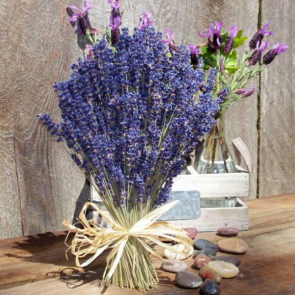 عکس پروفایل گل سنبل بنفش
